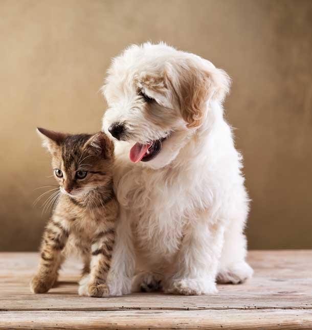 pets_care_6_petskingdom